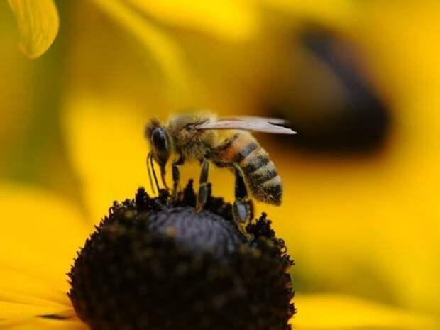 Анджелина Джоли устроила фотосессию с пчелами