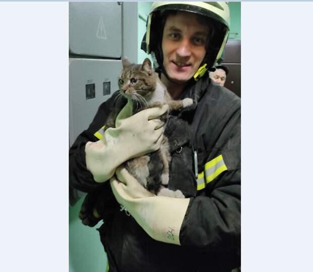На Таллинской спасли запутавшегося в проводах котёнка