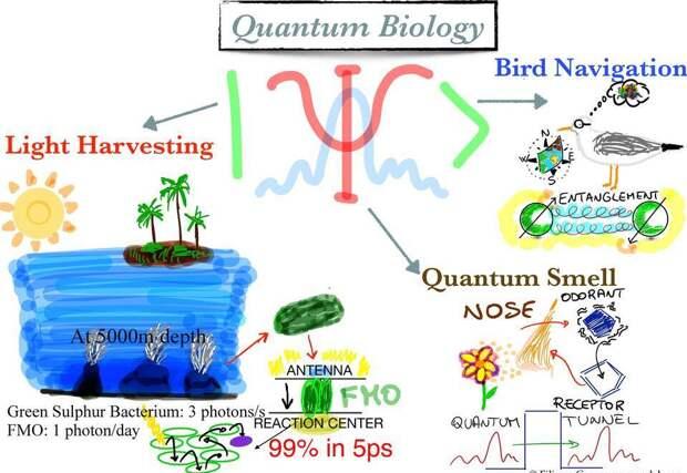 Что такое квантовая биология?