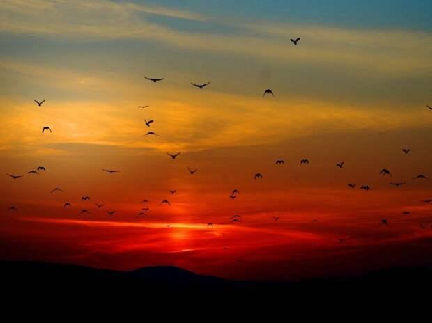 В США загадочно погибли сотни тысяч перелетных птиц