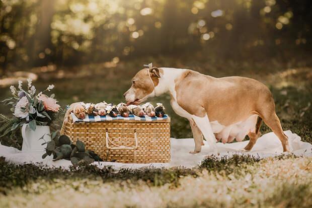 6 умилительных фото собаки до и после родов. Это самая оригинальная фотосессия беременяшки