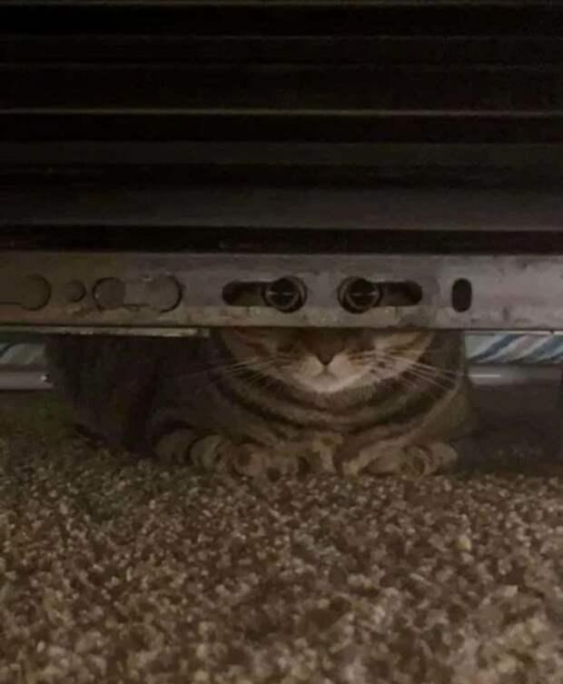 10+ фото котов, которых поймали в самый смешной момент их жизни