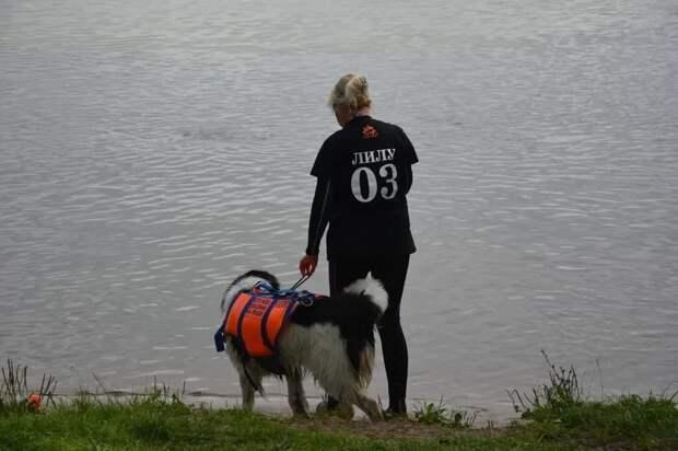 Сила, выносливость и точность: На поисково-спасательной станции «Строгино» прошли экзаменационные испытания собак-спасателей