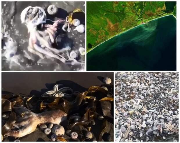 Экологическая катастрофа на Камчатке: дно усеяно трупами морских животных