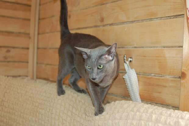 Следите за тем, куда направляете кошку лазерной указкой