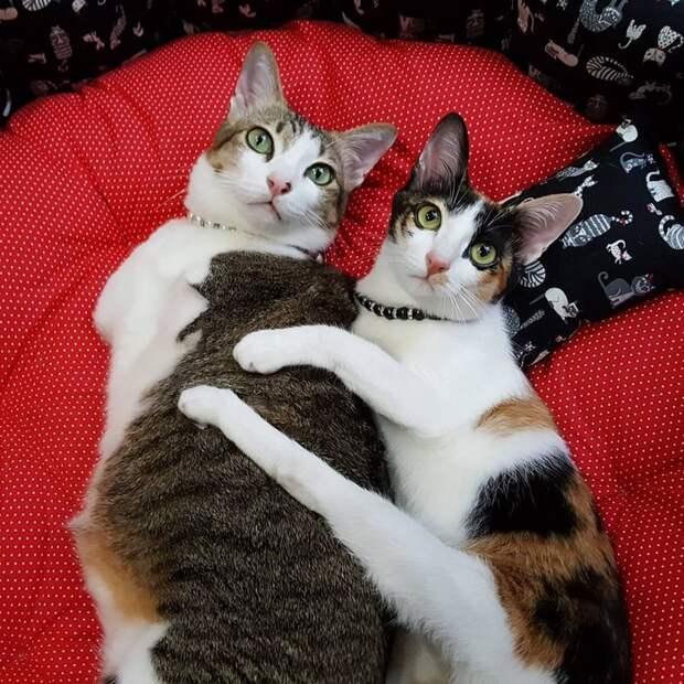Двухлапый кот