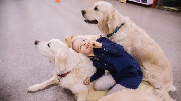 На Петрозаводской тренируют собак, которые помогут детям с тяжёлыми заболеваниями