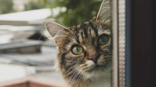 Игра на выживание: для чего кошка играет с мышью перед тем, как её съесть