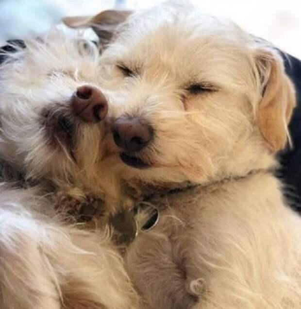 Собачки обнимаются