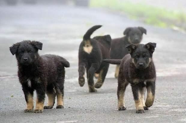 В Минприроды сосчитали бездомных собак и кошек
