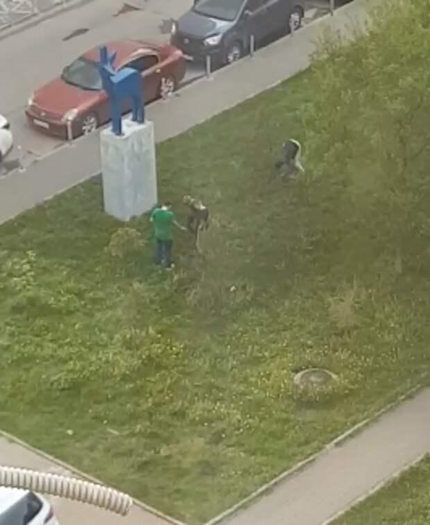 Хулиганы на Академика Комарова вытоптали газон и с корнем вырвали ель