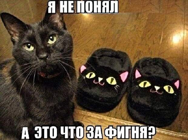 Котопост животные, коты, прикол, юмор