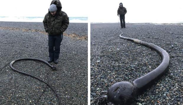 Напобережьях Чукотского полуострова обнаружили огромных «морских змей» изСША