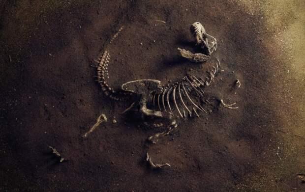 Ученые подсчитали, что наЗемле жило около 2,5 млрд тиранозавров