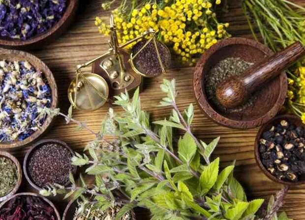 Как вывести грибок из организма народными средствами