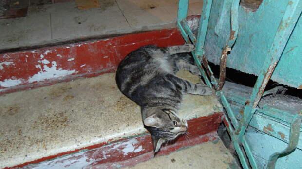 Маленькому котику нужен любящий дом.