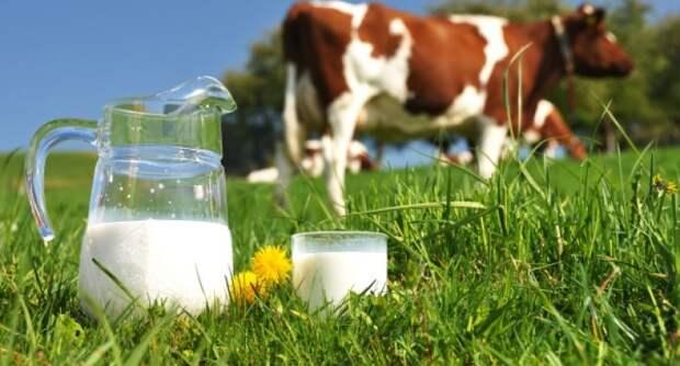 Учёные установили, что степные кочевники начали пить молоко около пяти тысяч лет назад