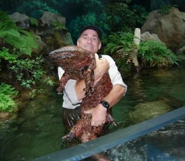 Саламандра в искусственной среде обитания.