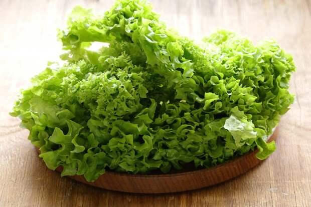 Сезон сочного салата: виды и применение в кулинарии