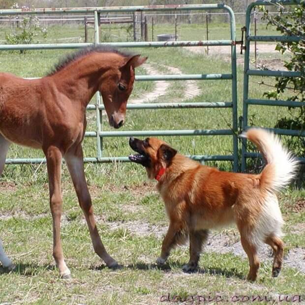 История дружбы собаки и лошади!