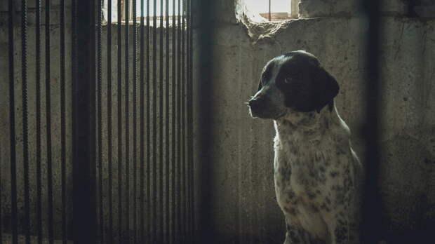 Миллионы тратят на отлов и содержание бездомных животных в Ростовской области