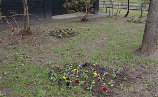 Фото дня: жители высадили цветы на Ботанической