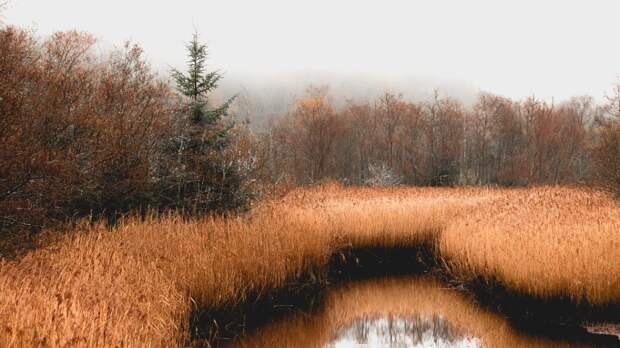 Омские спасатели обнаружили в болоте квадроцикл пропавшего министра Мураховского
