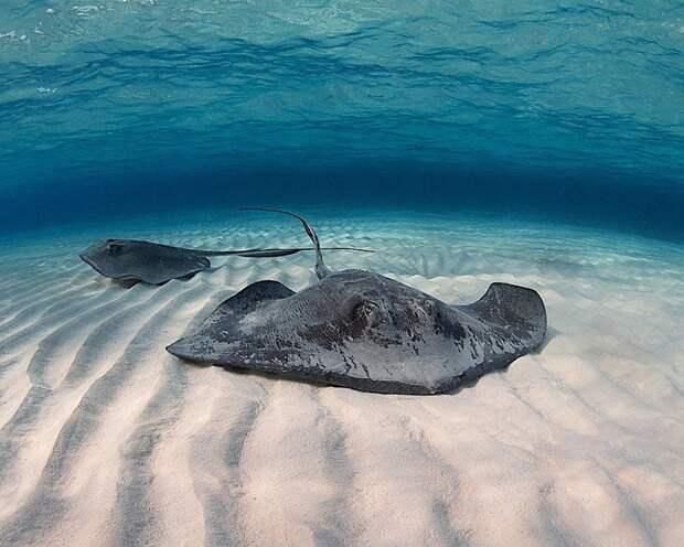 Как морские животные стали ценными научными сотрудниками