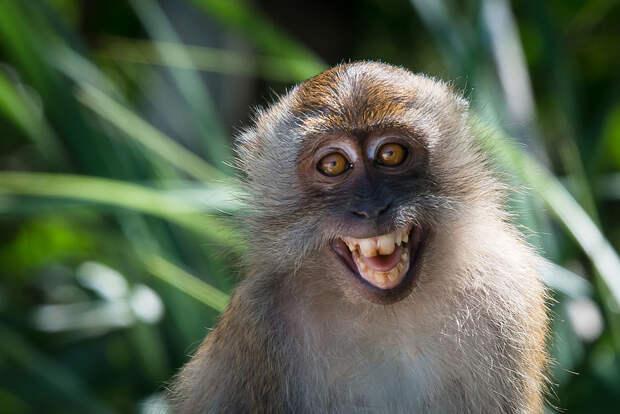 В США впервые за два десятилетия обнаружен вирус оспы обезьян