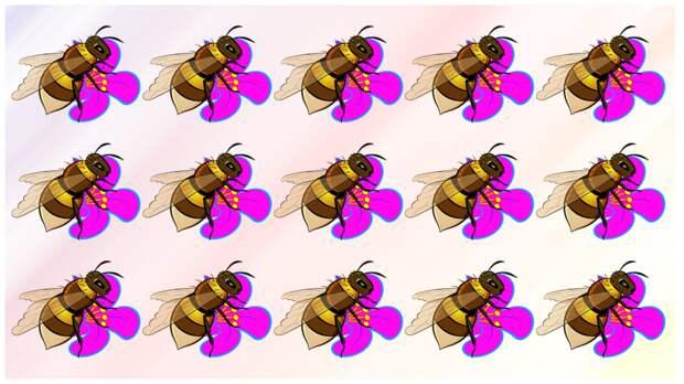 Тест на внимательность: найдите за одну минуту чем на картинке отличается шмель, который сидит на цветке