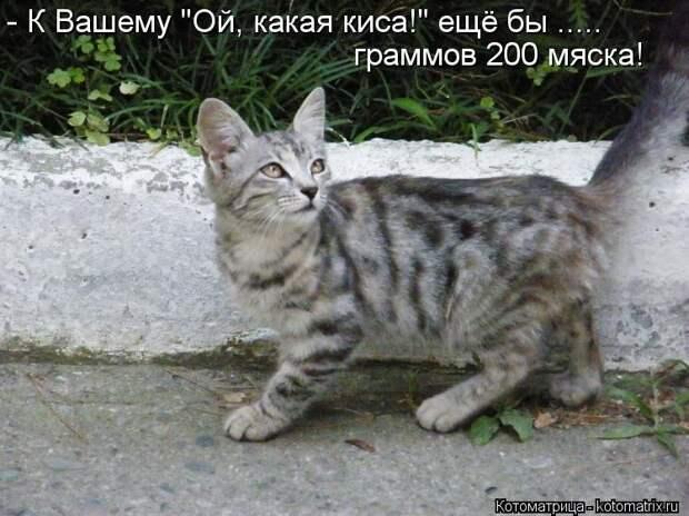 1474017276_kotomatricy-27