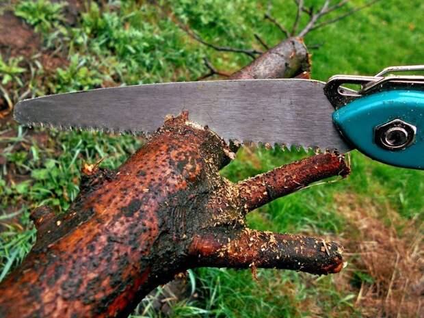 Сухое дерево во дворе на Лавочкина спилили и вывезли