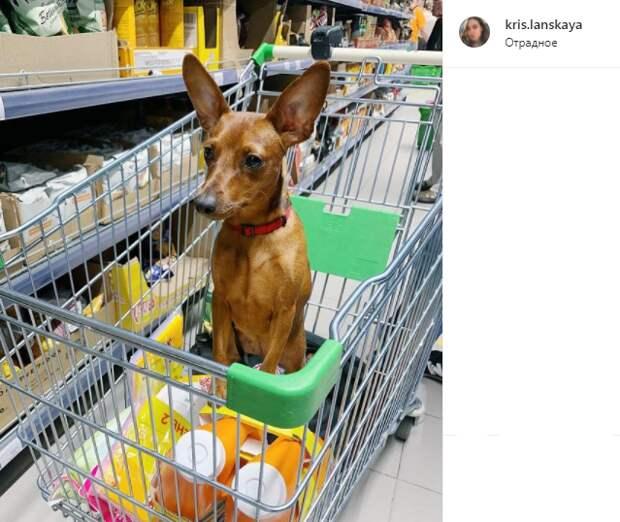 Фото дня: в магазине Отрадного появился четвероногий покупатель