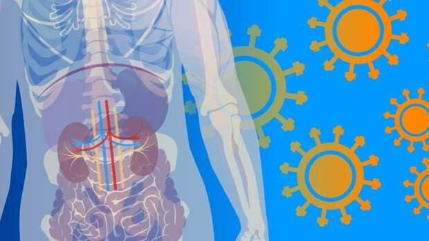 Эксперт рассказал, когда антитела к коронавирусу исчезают из организма