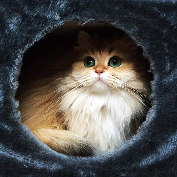 Встречайте Смузи — самую фотогеничную кошку на свете
