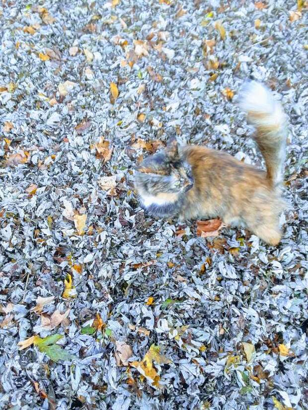 Девушка выпустила кота во дворе и вскоре тот «растворился» в куче с опавшей листвой
