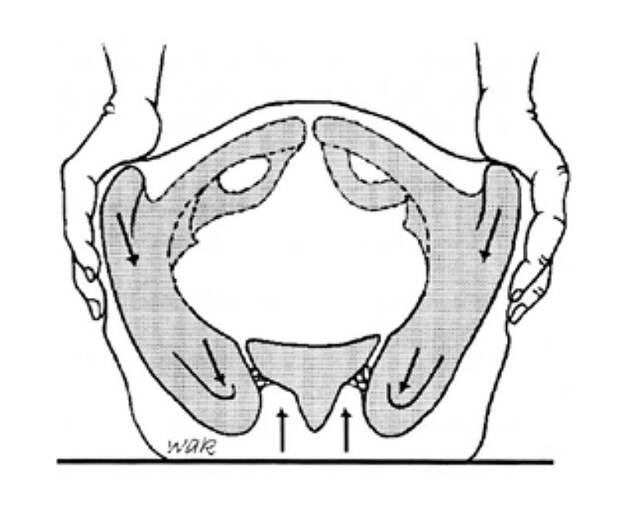 Так выглядит одна из диагностических методик: остеопат нажимает на таз, чтобы оценить, какое положение занимают составляющие его кости. Источник: Глоссарий остеопатической терминологии
