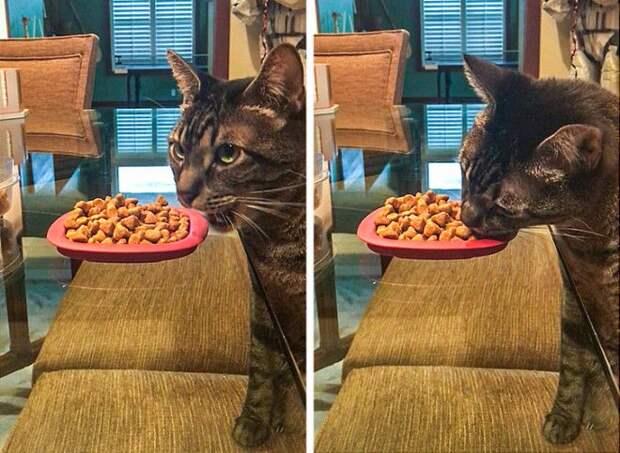 S15 случаев когда коты блеснули сообразительностью