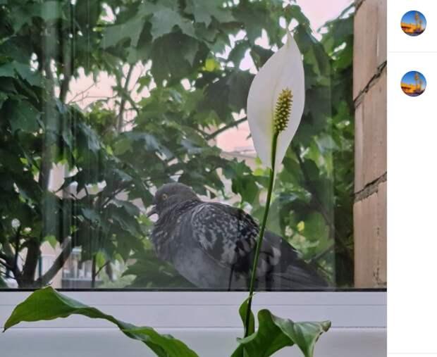 Фото дня: обеденный перерыв голубя