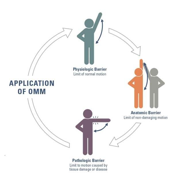 Цель остеопатов — устранить физиологические ианатомические препятствия дляестественных движений тела. Источник: Объяснение остопатической манипуляционной медицины, буклет Aacom