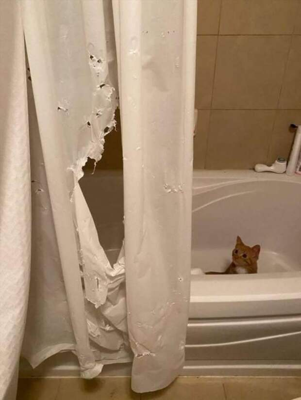 Коты, которые живут в своем мире и по своим правилам (13 фото)