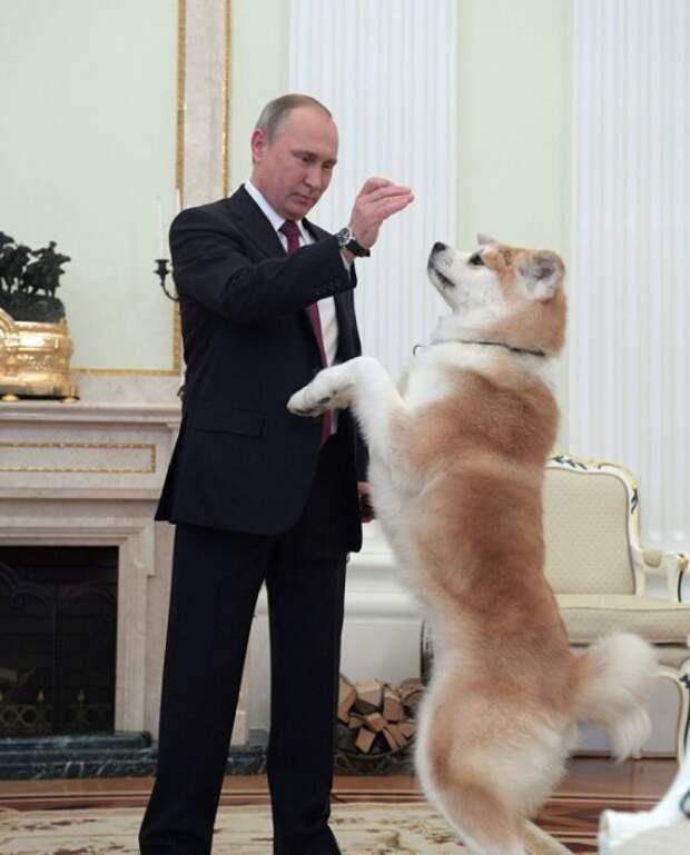 Путин показал японским журналистам подаренную ему собаку (3 фото)