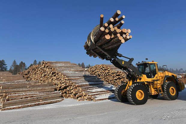 Сахалин вложит 800 млрд рублей в создание лесопромышленного комплекса