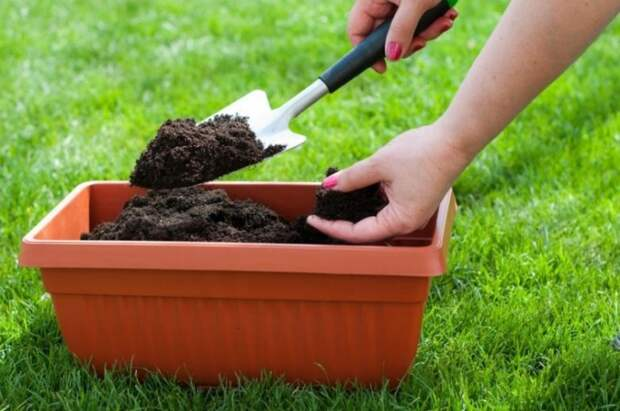 Как сохранить бытовые отходы для весенней подкормки растений
