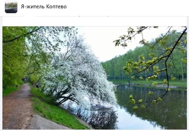 Фото дня: цветущие деревья тянутся к воде Большого Садового пруда