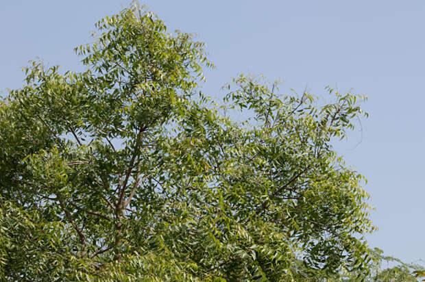 Возле дома на Башиловской убрали упавшее дерево