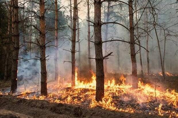 На территории Красноярского края действуют 10 лесных пожаров
