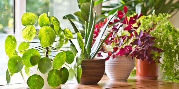 Выбирая комнатное растение, необходимо сразу продумать, где оно будет стоять и достаточное ли в этом месте освещение