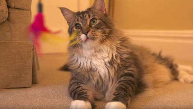 В Британии нашли самую длинную кошку в мире