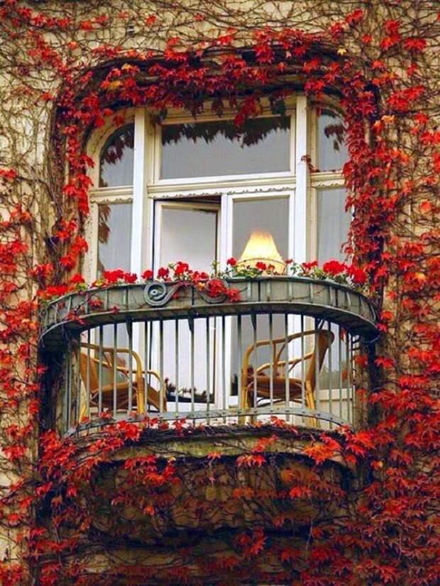 Очень красивый открытый балкон, который стал таковым благодаря красным эффектным листьям.